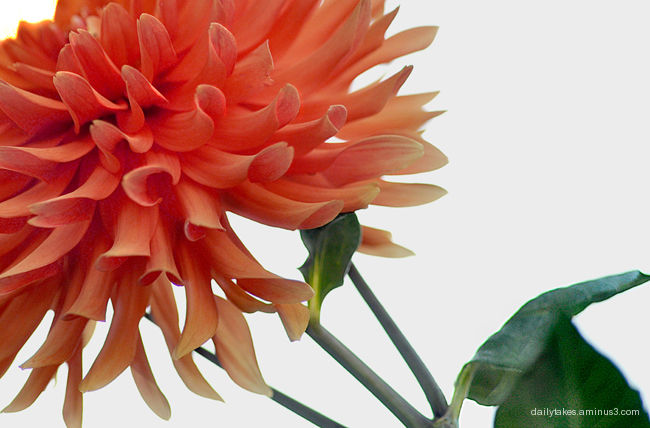 autumn mum: plain and simple
