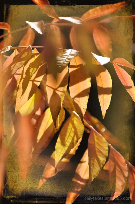 shadows of leaves ....