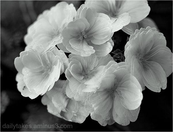 winter white ....