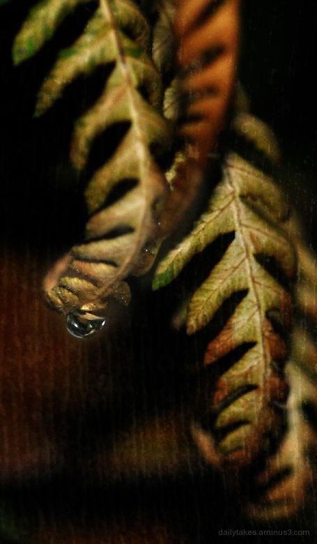 raindrop ....