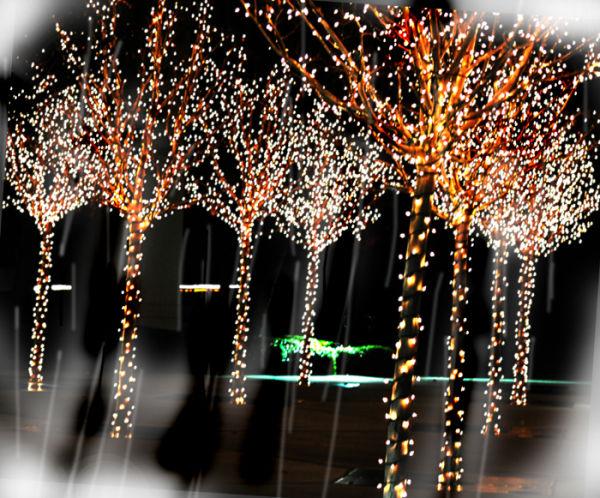 trees of light ....