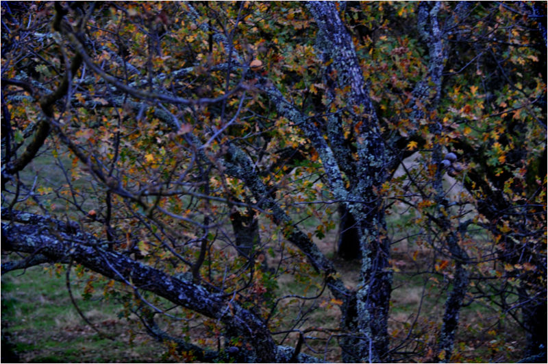 winter branches ....