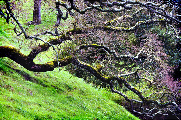downward leaning branch ....