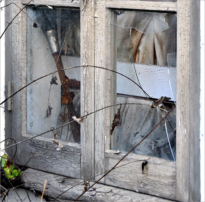 broken window & vine ....