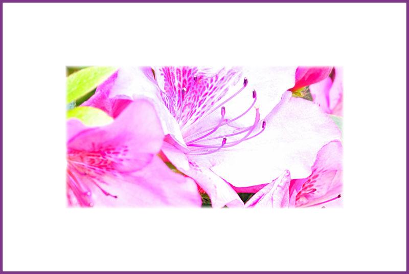 impressions of azaleas : stamen & pistils