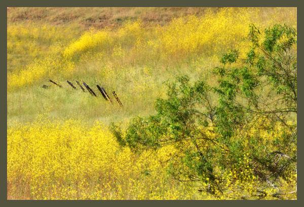 impression of yellow ....