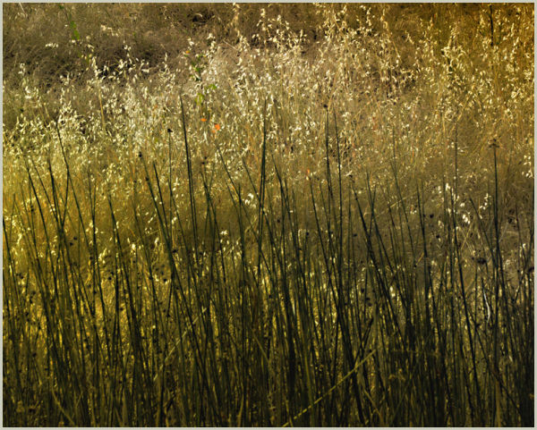 grasses ....
