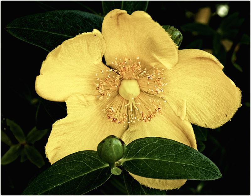 flowers yellow macro summer