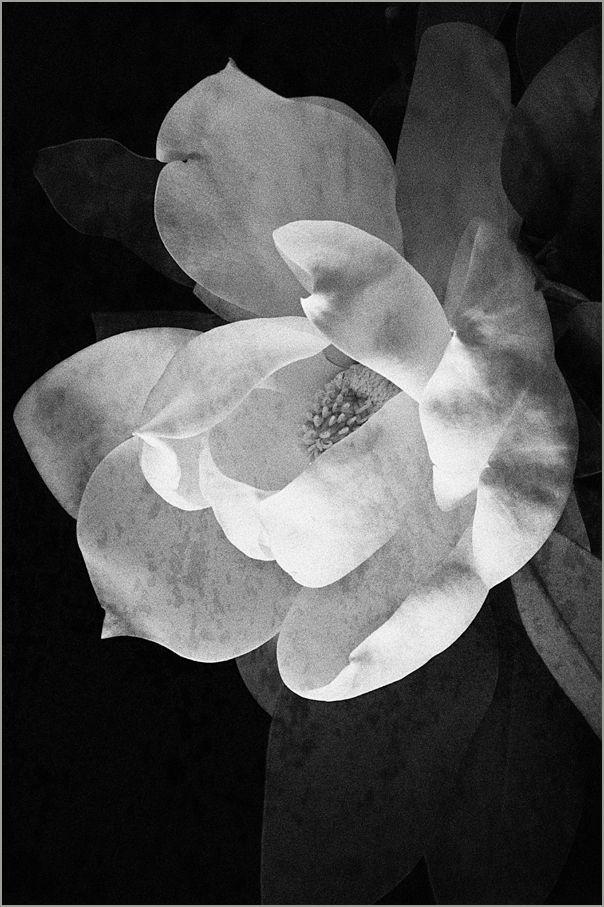 magnolia 2 : inner sanctum