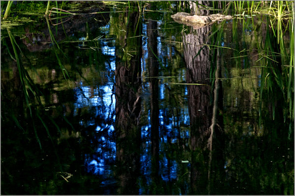 reflections in the deep .....