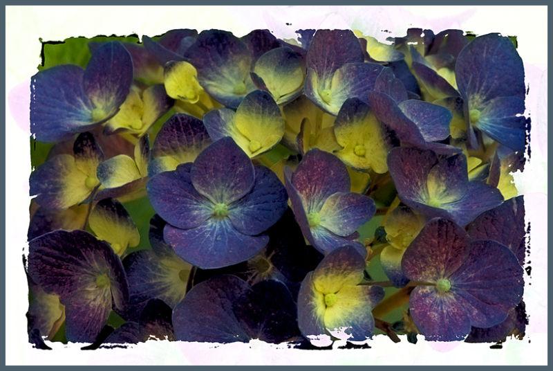 purple passion ....