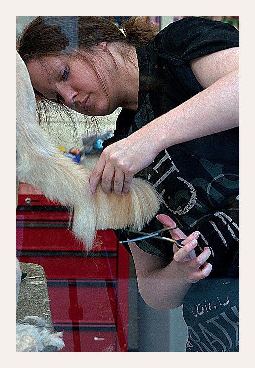 seen through the window : doggie haircut