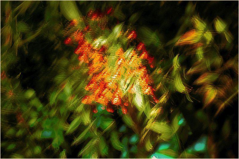 frisson : nandina berries at night