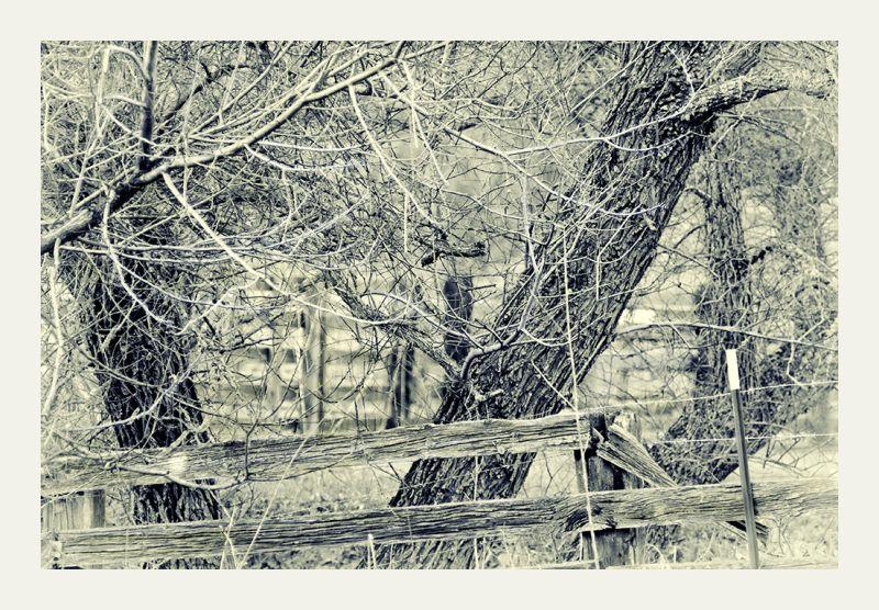 california winter :   fenced in  . . .