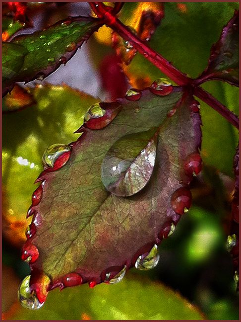 patterns of raindrops  . . .