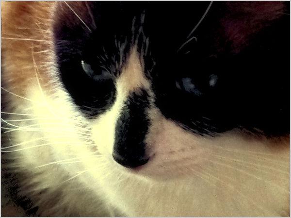 a cat's world : 2