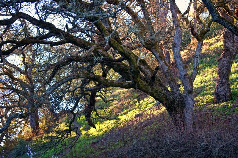 late afternoon on the hillside   . . .