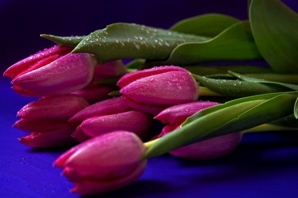 tulips for lea  . . .
