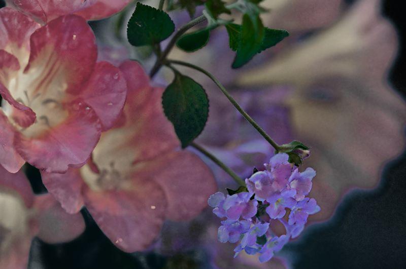 lantana blossom  . . .