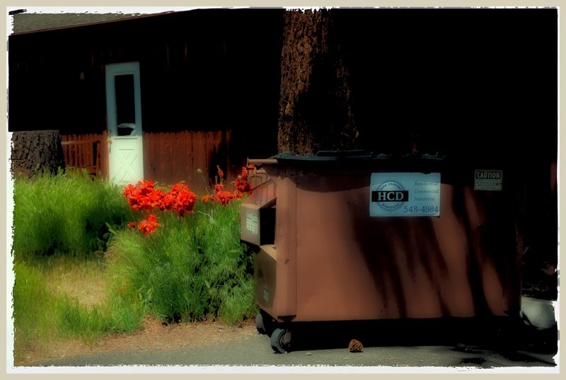 poppies in an alley  . . .