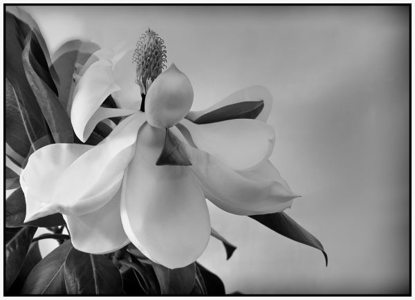 magnolia season : 2  . . .