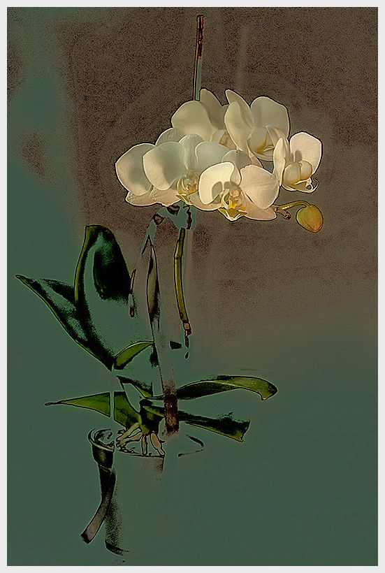 orchid drawing  . . .