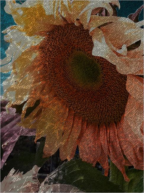sumi sunflower   . . .