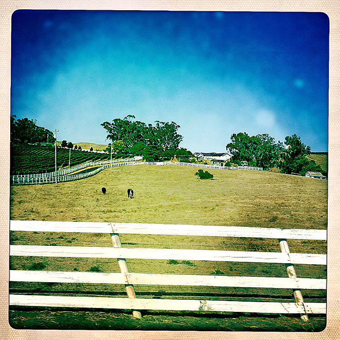 the road to petaluma : fenced in