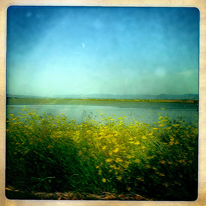 the road to petaluma : wetlands