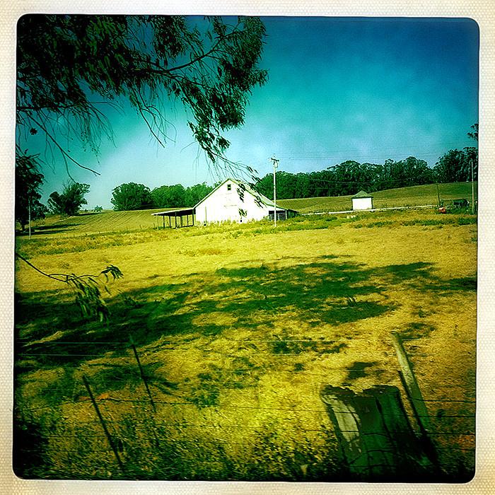 the road to petaluma : white barn