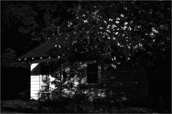 abandoned under the oleander   . . .