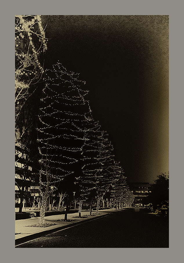 trees lights night christmas decorations monotone