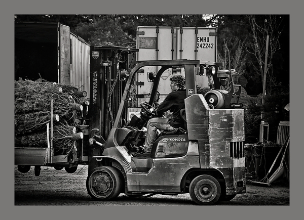 man unloading christmas trees with forklift