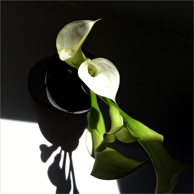 callas in a vase   . . .