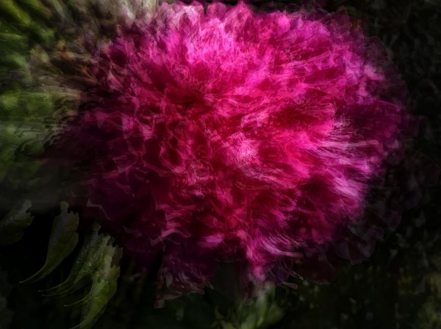 rowdy rhododenron   . . .