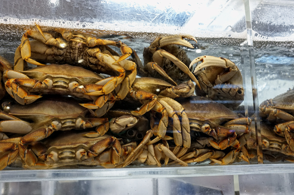 live lobsters at the Asian market...oops, crabs !
