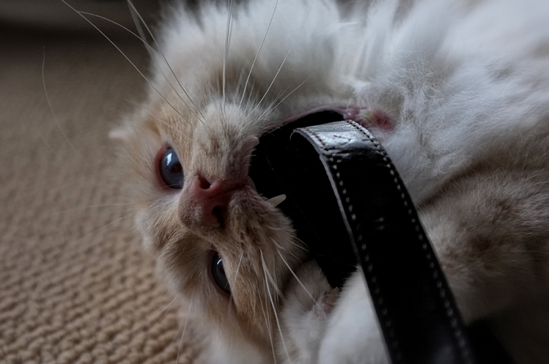 ST: chewing on my leather camera strap