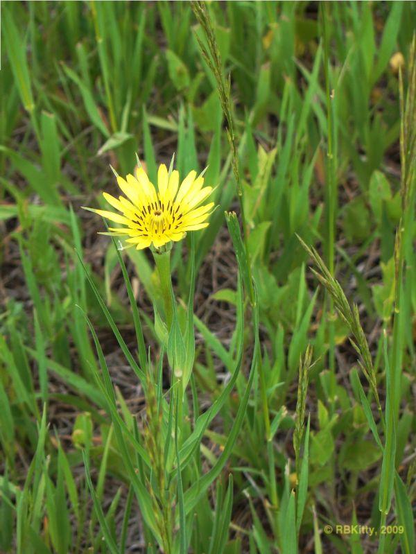 Prarie flower