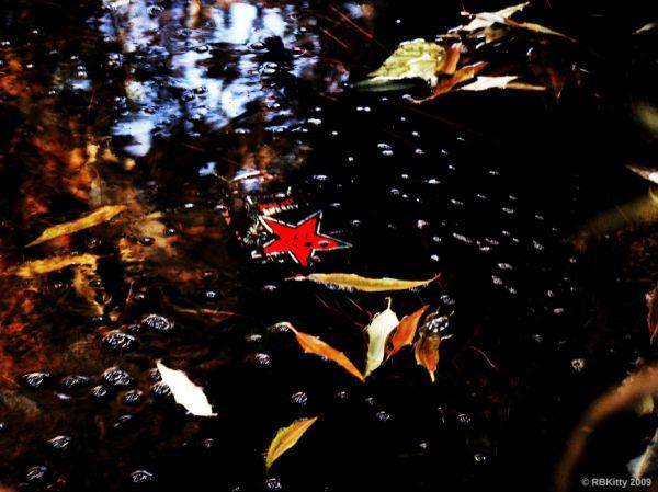 Dark star pond trashy can