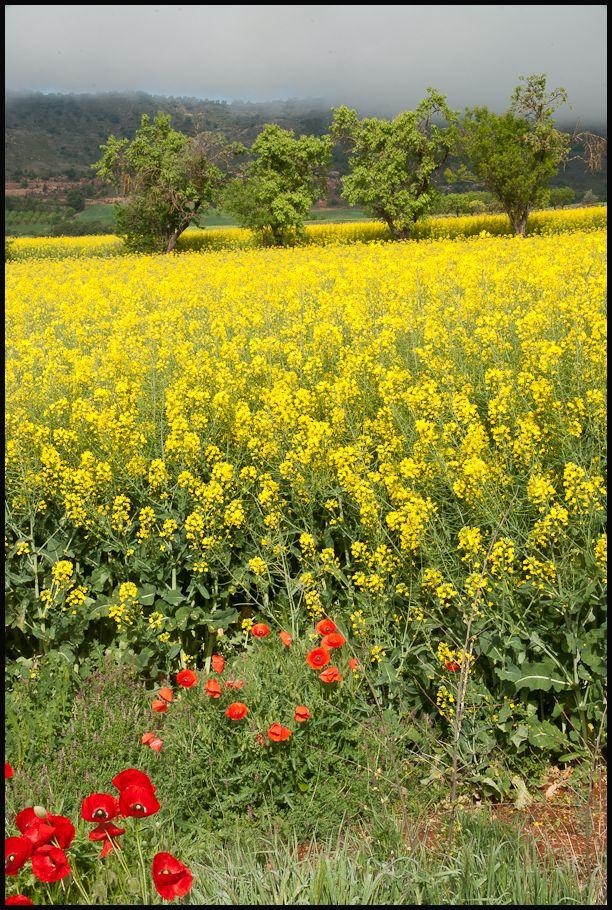 Talarn, Pallars Jussà, Catalonia, Spain