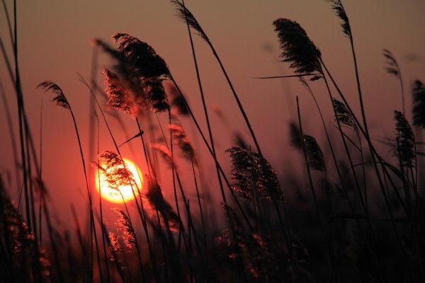 soleil coucher etange camargue