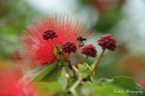 porcupine plant?