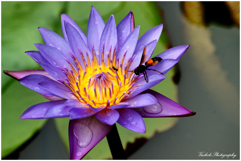 Lily & Bee