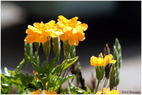 Flowers under the sun