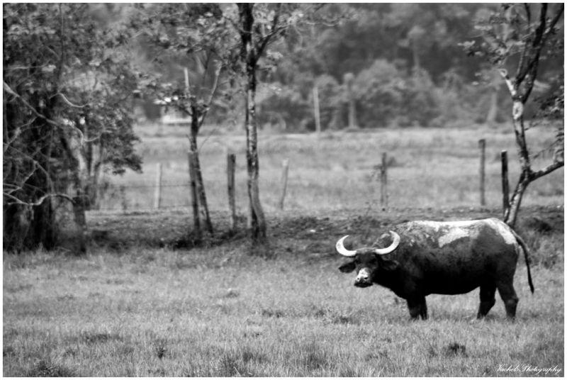 Buffalo & it's playground