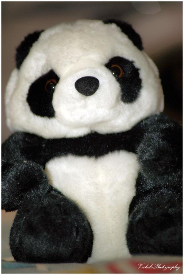 Panda !!!!