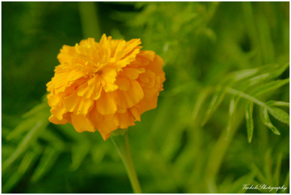 Beauty of the Yellow