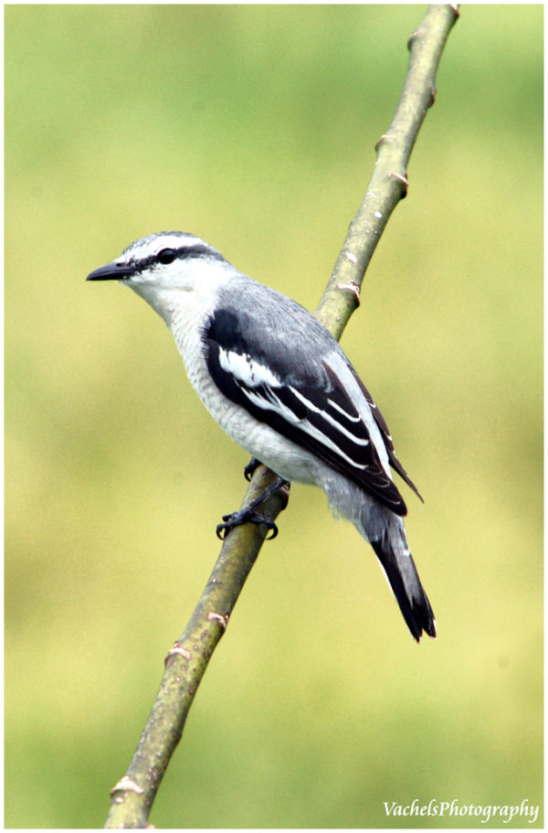 unknown bird to me???