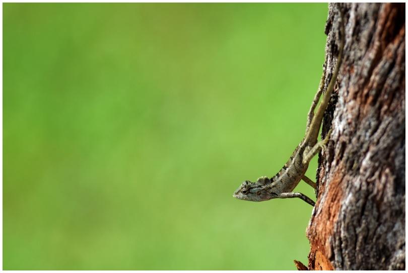 Lizard stand