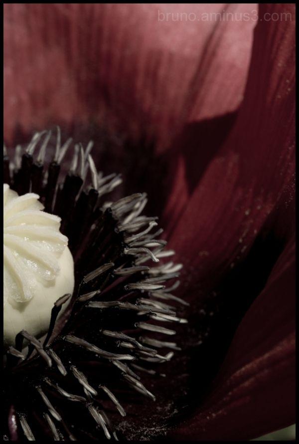Flower, Botanical Gradens, Nature, Plants